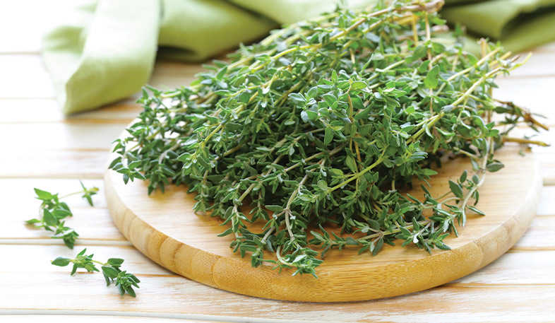 Thyme on a table used in essential oil product