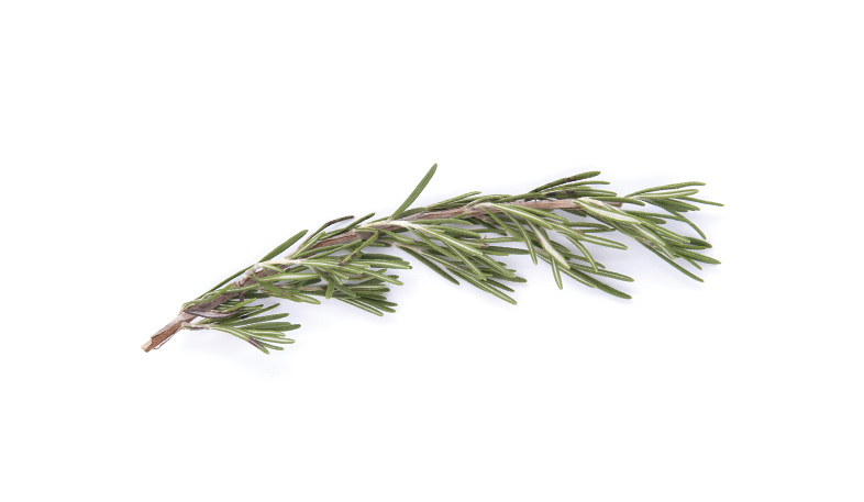 Rosemary used in essential oils